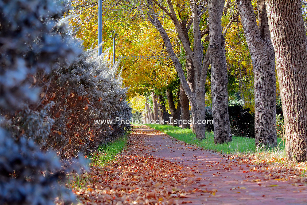 Autumn. A path covered with shed  leaves