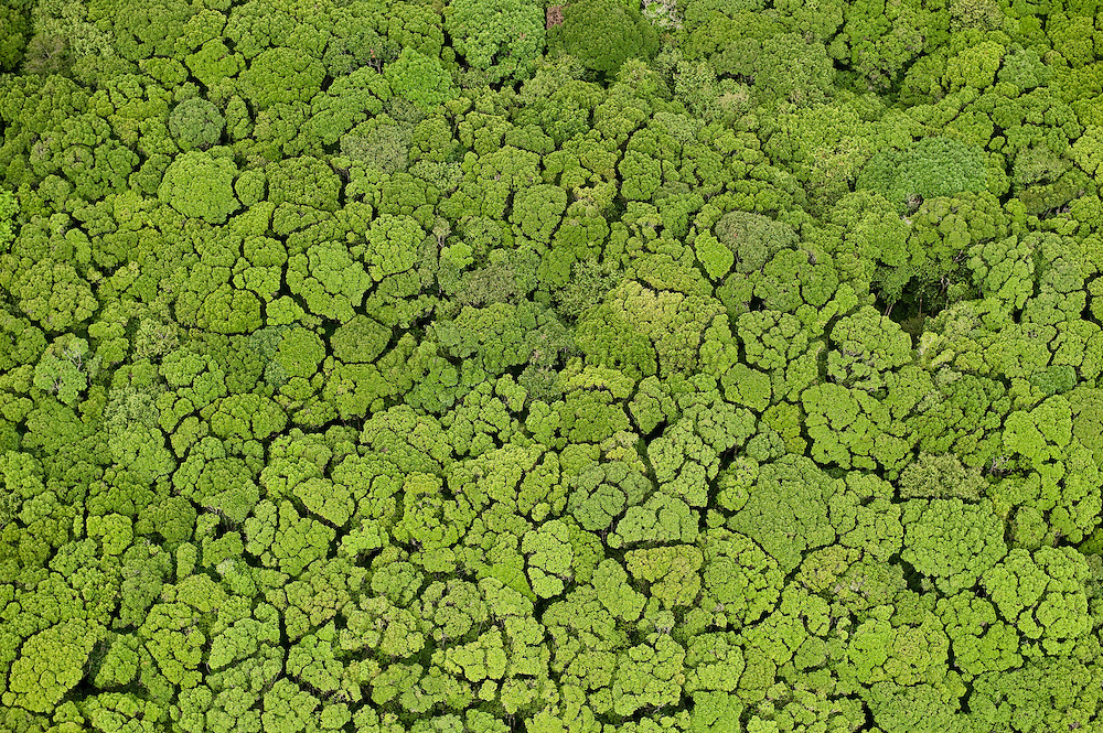 Aerial View of Rainforest canopy<br /> Iwokrama Reserve<br /> GUYANA<br /> South America