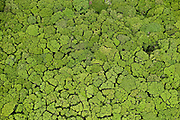 Aerial View of Rainforest canopy<br />