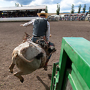 Once they open the gate it doesn't take long before the bull goes airborne in an attempt to shake his rider off his back. Missoula Photographer, Missoula Photographers, Montana Pictures, Montana Photos, Photos of Montana