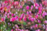 https://Duncan.co/pink-leaves