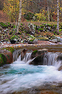 The Gesso river in its higher course within the Alpi Marittime Natural Park in Piedmont, Italy, surrounded by a wide variety of trees and bushes in autumn dress.