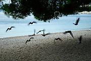 Pigeons in flight, Makarska, Croatia