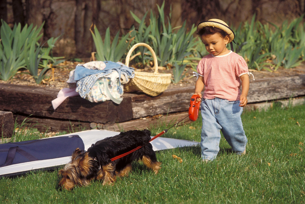 2 year old Hispanic-Filipino girl with hat walking dog on leash during a picnic in Austin, Texas.  Model Release.<br /> ©Bob Daemmrich