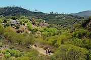 People Riding Horses Through Topanga Canyon