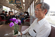 "May 21, 2018, Seika, Japan: This is Yoshikazu Tanaka, Ph.D., Senior General Manager of the Suntory World Research Center commuting to a lecture he's about to give in Kyoto about blue roses and carnations he developed. Tanaka, who for the past 28 years has been experimenting with creating genetically modified blue roses and carnations at Suntory has come very close, but has not yet succeeded in producing a truly blue rose. Sought after by botanists and horticulturists since the nineteenth century, the blue rose is so elusive as roses lack genes that can produce blue pigment. To change this, Tanaka and his team isolated blue genes from petunias and introduced them into roses that produce a blue pigment called delphinidin. Achieving results in 2004, Suntory was granted government approval to begin marketing their genetically modified roses, and in 2009 began selling their first blue rose called ""Applause"". Tanaka however still feels challenged and is trying to produce a deep blue rose not only through genetics, but also with the aid of metal ions and compounds that enhance blue pigments called flavones. He is also experimenting with higher ph levels which also help to increase blue pigments. Tanaka and Suntory have also succeeded in producing blue carnations which adapt better to gene modification. In 1997 they began marking their blue ""Moonseries"" carnations and have since introduced other varieties using pansy genes. Currently these blue carnations are grown in Columbia and Ecuador and sold primarily in the USA and Europe. Due to Suntory holding early patents to this technology, they face no competition in the manufacturing of blue roses and carnations. The international floral market is a multi-billion dollar industry and if Suntory succeeds at producing a perfectly blue rose the market potential would be astounding. Photo by Torin Boyd."