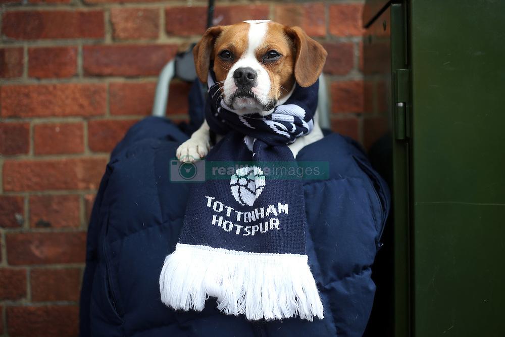 26 February 2017 - Premier League - Tottenham Hotspur v Stoke City<br /> Charlie the dog wears his Tottenham Hotspur scarf<br /> Photo: Charlotte Wilson