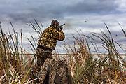 Photo No 5 of series - Hunter kills canvasback drake on open water marsh.