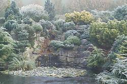 The frozen pond and rock garden with mixed conifers in John Massey's garden in winter. Design: John Massey, Ashwood Nurseries