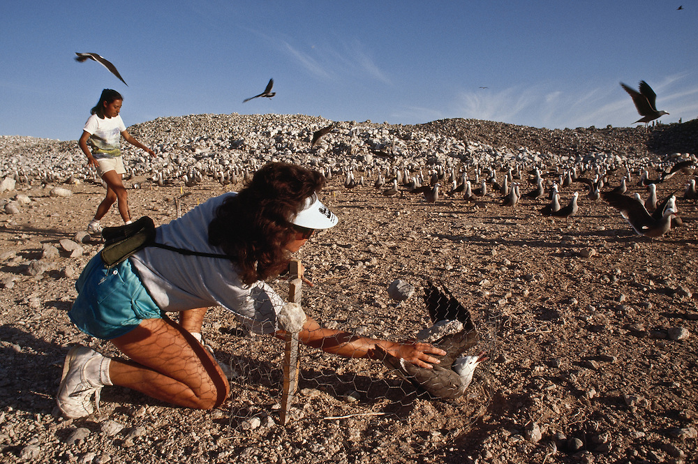 A woman frees a trapped seagull from a chicken wire fence on the beach.