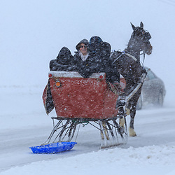 Bird-in-Hand, PA - March 5, 2015: A one horse sleigh shares the road during a snowstorm in rural Lancaster County.