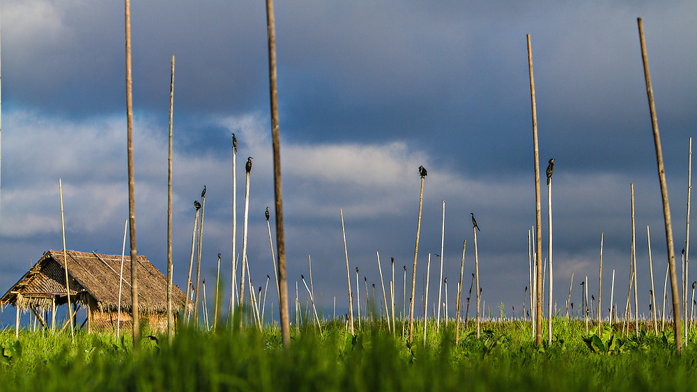 Birds rest on poles in Inle Lake, Myanmar.