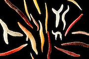 [Digital focus stacking] Within the diverse shapes of calcaeous particles there are spicules which served as structural elements and to a certain degree as a deterrent of predators in soft corals. After the die-off of the soft coral the spicules become a fraction of the sediment and therefore also of the sandy beaches. Raja Ampat, Indonesia. Diagonal of frame approx. 5 mm  [size of single particle: 2,5 mm] | Unter den formenreichen Partikeln des Kalksandes findet man Kalknadeln, die als sogenannte Sklerite  in lebenden Weichkorallen (Alcyonacea) für die Stabilisierung des Gewebes und eine gewisse Abschreckung von Freßfeinden sorgen. Nach dem Absterben der Korallen verbleiben die Nadeln im Sediment und bilden so einen Teil des Korallensandes. Raja Ampat, Indonesien. Bilddiagonale ca. 5 mm