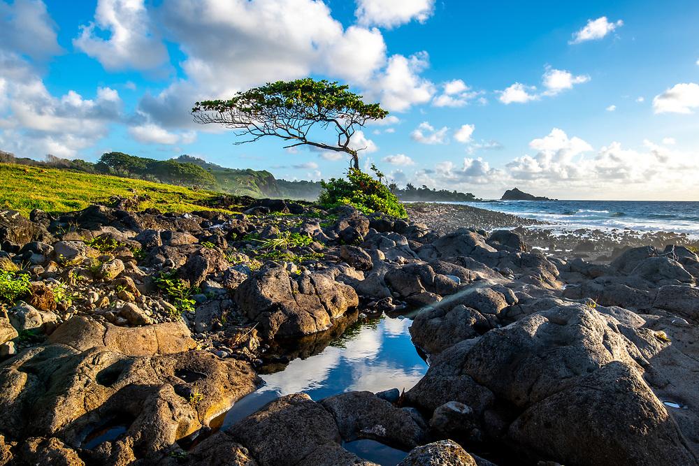 The Hana Coast