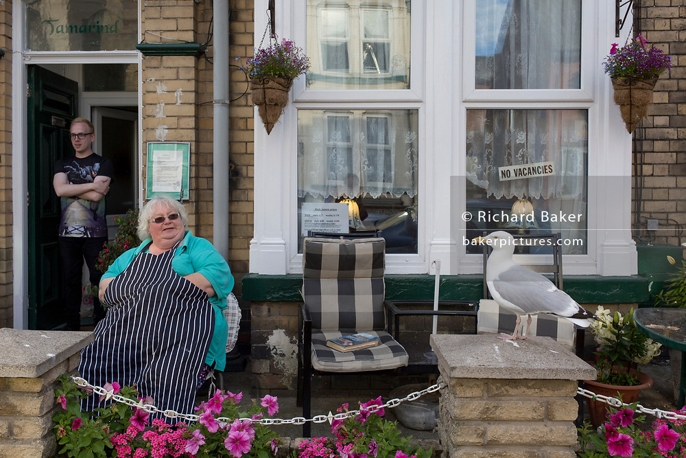 The landlady of a typical British seaside Bed and Breakfast sits outside wearing her apron while a tame seagull waits for regular titbit scraps that she feeds the gull and its female partner, on 14th July 2017, at Scarborough, North Yorkshire, England.