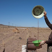 "A worker removes the leaf matter from the grain while harvesting quinoa on the arid highlands near Challapata, Bolivia. .The nutritional qualities of the seed have generated a new export market for South American farmers. Demand for the grain-like seed are increasing due to its nutritional benefits. Quinoa contains more protein than any other ""grain"" and includes all eight essential amino acids needed for tissue development. Quinoa has been cultivated in the Andes since 3000BC. Challapata, Bolivia, 12th May 2011. Photo Tim Clayton"