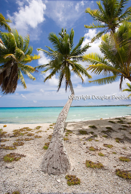 Curved palm tree<br />