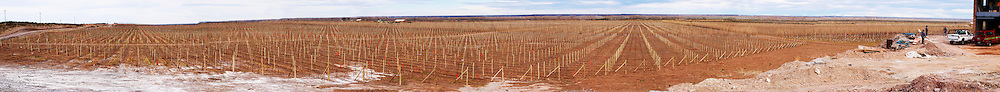 A very wide panoramic view of the Patagonia vineyard Bodega Valle Perdido (previously Arquen) Winery, Neuquen, Patagonia, Argentina, South America