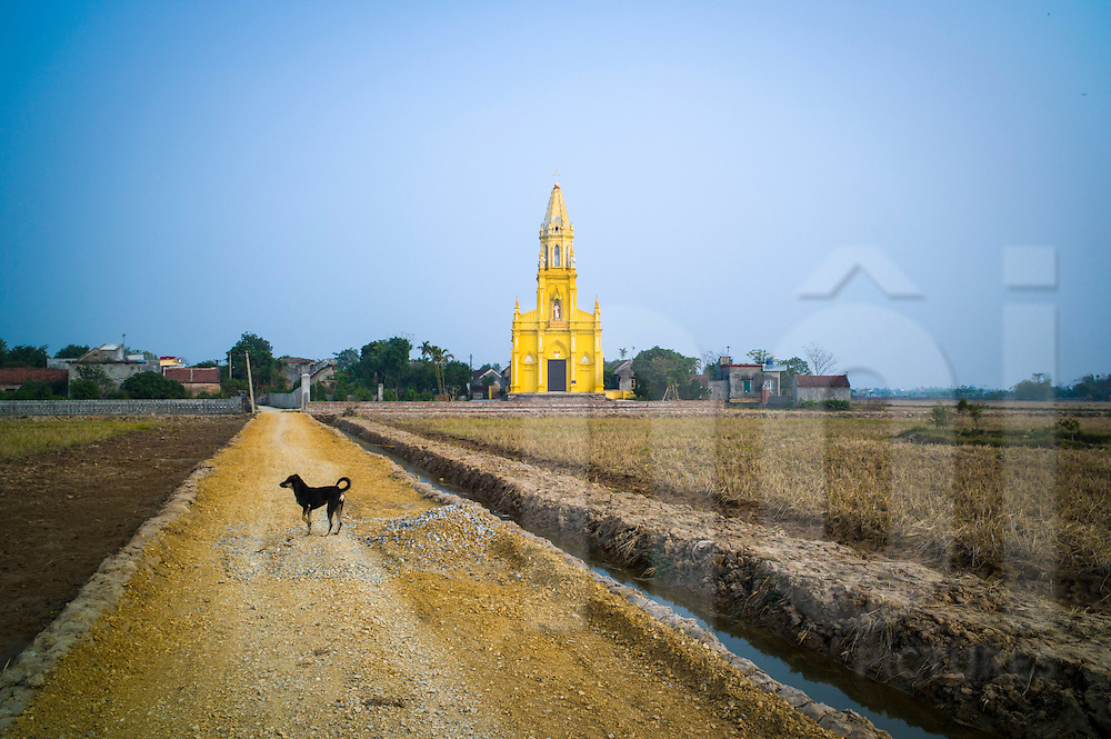 Dog stands in the middle of Road 490 leading to a lone yellow church in the countryside between Nam Dinh City and Lieu De Town, Nam Dinh Province, Vietnam, Southeast Asia
