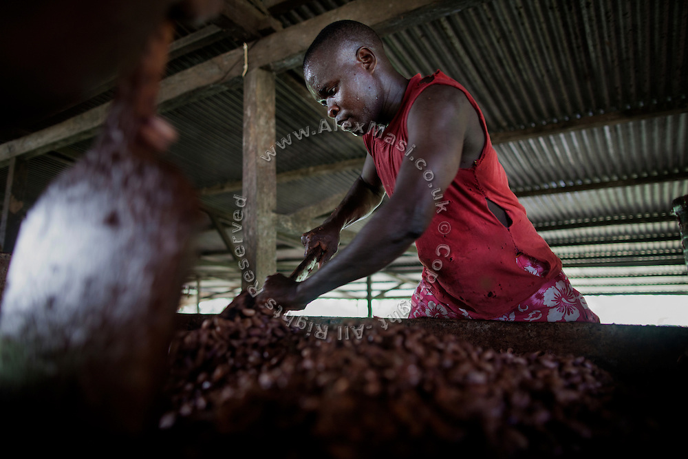 A worker is turning cocoa beans brewing in the technical area of the Claudio Corallo's plantation on the island of Principe, Sao Tome and Principe, (STP) a former Portuguese colony in the Gulf of Guinea, West Africa.