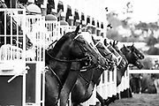 NOVEMBER 3, 2017: BREEDERS' CUP JUVENILE TURF GRADE I - $1,000,000:  Horses break from the starting gate.