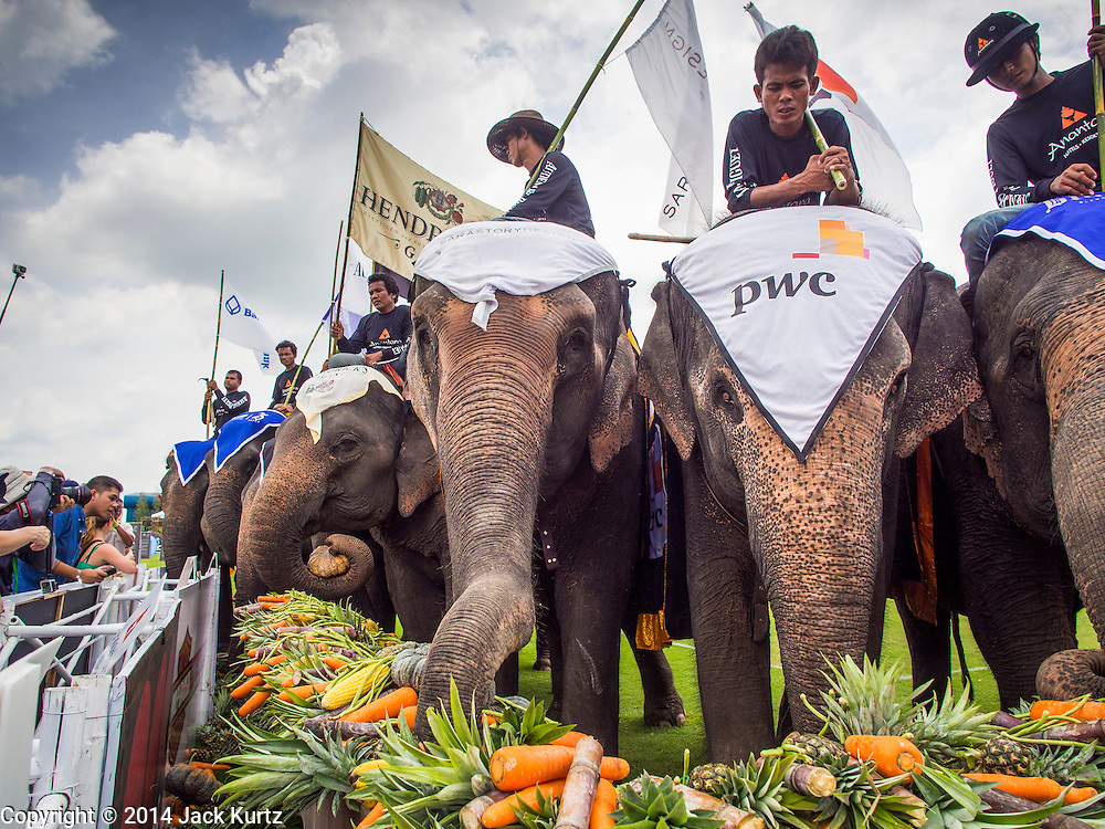 """28 AUGUST 2014 - BANGKOK, THAILAND: Elephants at the fruit buffet at the King's Cup Elephant Polo Tournament at VR Sports Club in Samut Prakan on the outskirts of Bangkok, Thailand. The tournament's primary sponsor in Anantara Resorts. This is the 13th year for the King's Cup Elephant Polo Tournament. The sport of elephant polo started in Nepal in 1982. Proceeds from the King's Cup tournament goes to help rehabilitate elephants rescued from abuse. Each team has three players and three elephants. Matches take place on a pitch (field) 80 meters by 48 meters using standard polo balls. The game is divided into two 7 minute """"chukkas"""" or halves.     PHOTO BY JACK KURTZ"""