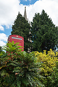 """Marlow, Bucks , United Kingdom, <br /> <br /> General View, GV, """" Red Telephone Pay phone Box, looking up at the All Saints Church  Bell Tower, <br /> <br /> <br /> Thursday  15/06/2017<br /> <br /> <br />  © Peter SPURRIER"""