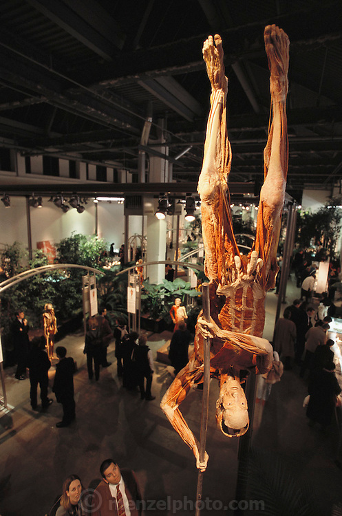"""""""The Pole-vaulter,"""" a piece from Gunther von Hagens' Body Worlds exhibits. Body Worlds is a traveling exhibit of real, plastinated human bodies and body parts. Von Hagens invented plastination as a way to preserve body tissue and is the creator of the Body Worlds exhibits.."""