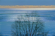 Tree and Lake Superior<br /> Near Nipigon<br /> Ontario<br /> Canada