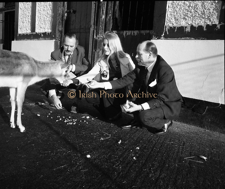 """Former Miss World Visits Dublin Zoo.<br /> 1973.<br /> 14.01.1973.<br /> 01.14.1973.<br /> 14th January 1973.<br /> Miss Eva Rueber-Staier, former Miss World from Austria and the """"World Wildlife Fund's Anniversary Girl"""", paid her first visit to Ireland to open the Shell/BP Irish Wildlife Promotion. As part of the promotion Eva paid a visit to Dublin Zoo in the Phoenix Park, Dublin.<br /> <br /> Image shows Miss Rueber-Staier accompanied by Mr Herbert James, Operations Manager, Irish Shell/BP and Mr Terry Murphy,The Director, Dublin Zoo as she pets a blackbuck antelope."""
