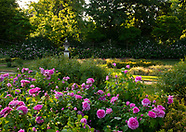 Chiswick House - Roses