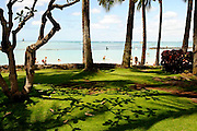 Shadows of Plumeria trees on beachside grass.<br /> Waikiki Beach, Honolulu, Hawaii