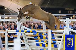 039, Royal Touch vh Schaeck<br /> Jumping Mechelen 2019<br /> © Hippo Foto - Martin Tandt<br />  27/12/2019