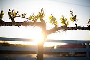 Napa and Sonoma California Vineyards