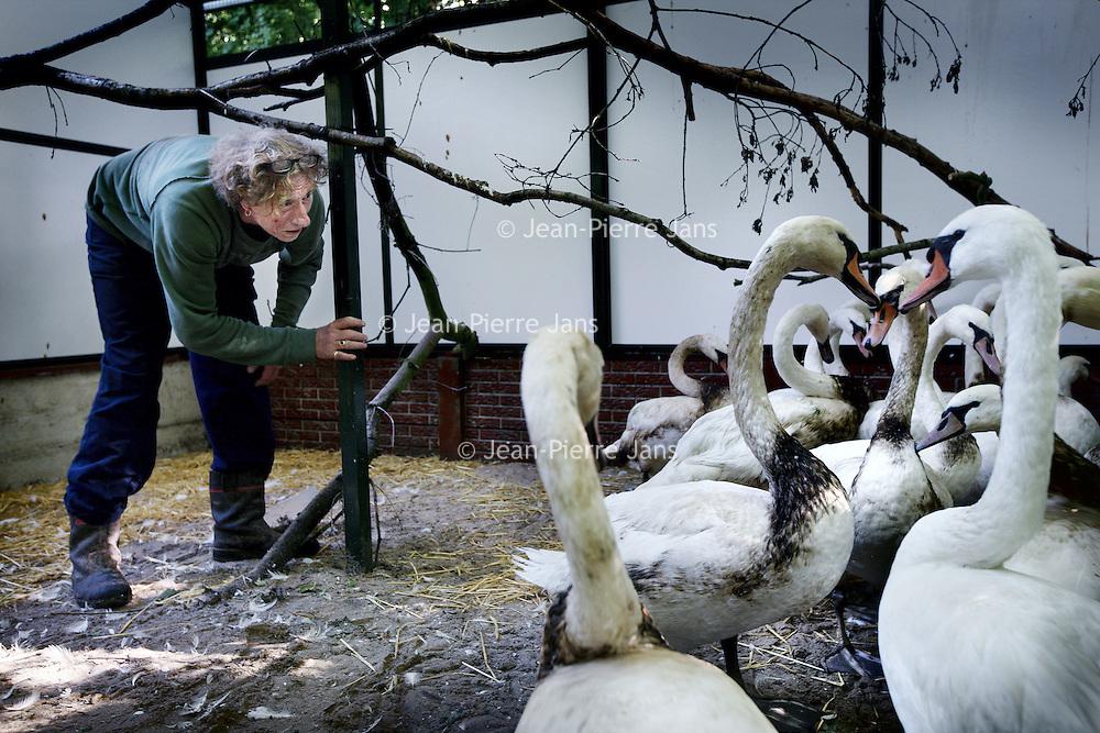 Nederland, Amsterdam , 15 juli 2011..Gerrit Zant van vogelopvang en kleine zoogdieren opvang de Toevlucht in de Bijlmer bij een aantal met olie vervuilde zwanen die uit het Westelijk Havengebied gevangen zijn.Foto:Jean-Pierre Jans