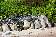 Glass bottles collected from beach, conservation environmental clean-up, Seychelles 1980