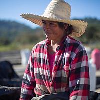Consuelo, part of a coffee team at the COMSA coop, Marcala, Honduras.