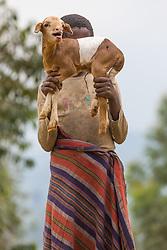 Boy Holding Up Goat
