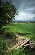 Wooden bridge crossing irrigation around paddy fields, Banyuwangi, East Java, Indonesia, Southeast Asia