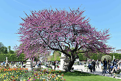 April 17, 2018 - Paris, Ile-de-France, France - Under a blazing sun, tourists and Parisians go out to reclaim the parks and banks of the Seine, in Paris on April 17, 2018. (Credit Image: © Julien Mattia/NurPhoto via ZUMA Press)