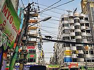 Black cat on wires in Yangon Myanmar