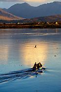 Photographer: Chris Hill, Roundstone, Connemara, County Galway,