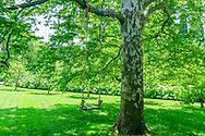 Tree with Swing, 134 Narrow Lane East, Sagaponack, NY