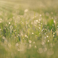 """""""About Light""""<br /> <br /> It is all about light, that amazing morning sunlight as it streams down through dew drops on a spring day! A spectacular green and light gold nature abstract!"""
