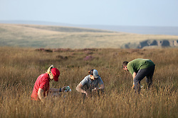 © Licensed to London News Pictures. 06/09/2021. Marsden, UK. National Trust volunteers plant Sphagnum Moss on the Marsden Moor Estate in the South Pennines. Sphagnum Moss, a peat forming plant which helps to reduce flooding and reduce fire risk by acting as a sponge, is being planted to help restore large area of moorland which were devastated by fires in April 2021. Photo credit: Adam Vaughan/LNP