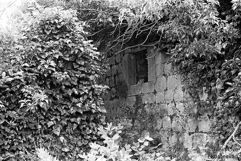 Kroatia 2012-06.<br /> Busker og trær skjuler godt en gammel ruin i skogen på Lopud.<br /> Foto: Svein Ove Ekornesvåg