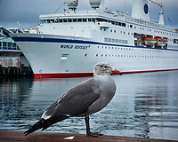 Seagull posing in front of the MV World Odyssey. Image taken with a Nikon 1 V3 camera and 10-30 mm lens (ISO 200, 28.5 mm, f/10, 1/125 sec)