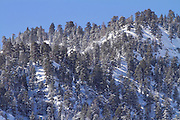 Winter trees in Wrightwood, California.