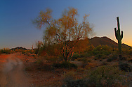 Desert colors in the sunset at San Tan Regional Park