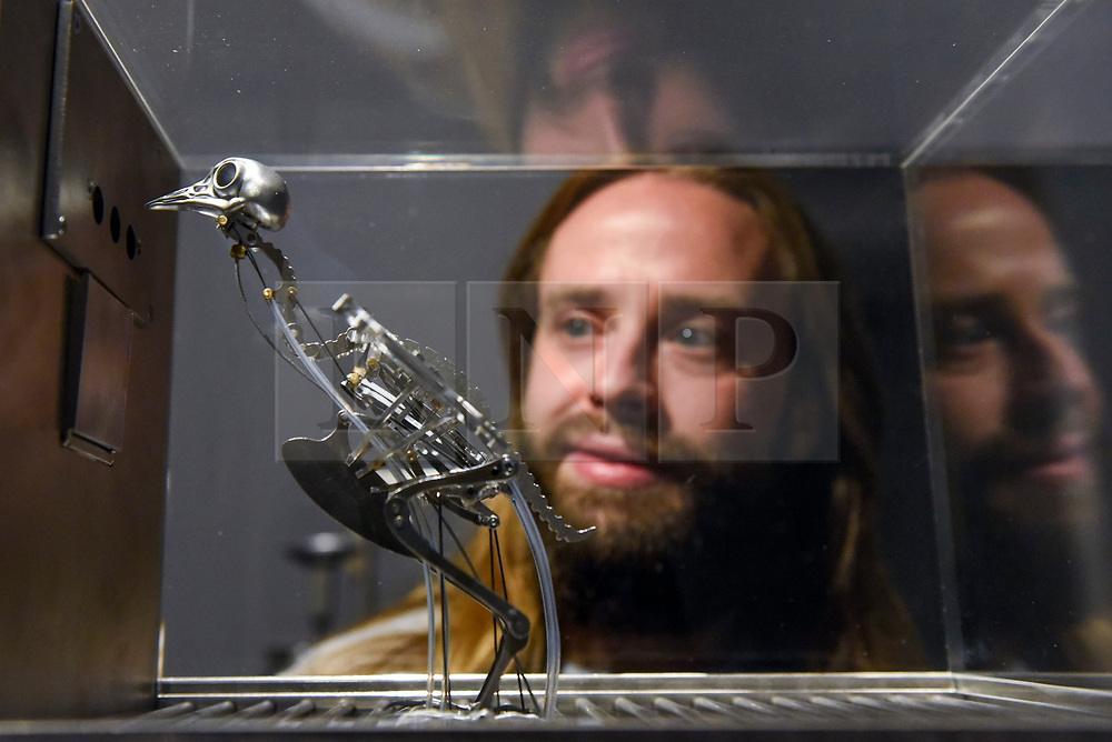 """© Licensed to London News Pictures. 29/10/2019. LONDON, UK. A staff member views """"The Machine Zone"""", 2019, by Max Collishaw, animatronic pigeons exhibiting obsessive repetitive behaviour. Preview of """"24/7: A Wake-Up Call For Our Non-Stop World"""", a new exhibition opening on 31 October at Somerset House.  The show examines our inability to switch off from our 24/7 culture.  Over 50 multi-disciplinary works explore the pressure to produce and consume information around the clock. taking visitors on a 24-hour cycle from dawn to dusk through interactive installations.  Photo credit: Stephen Chung/LNP"""